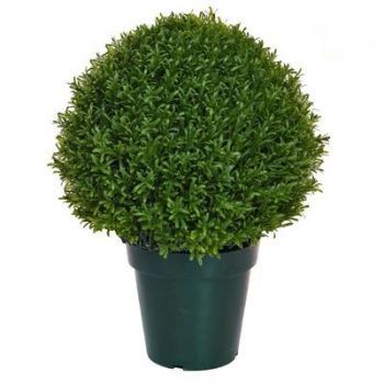 Topiary Rosemary Ball UV