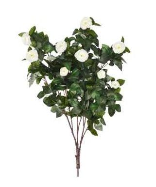 Camellia Branch 10 Pack