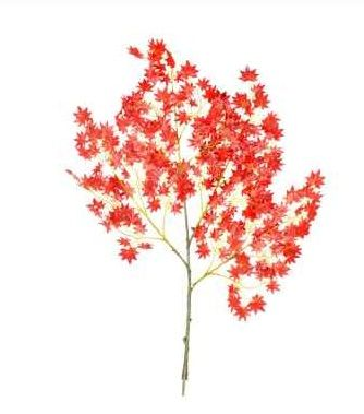 Red Acer Branch 10 Pack