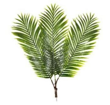 Palm Frond Branch 10 Pack
