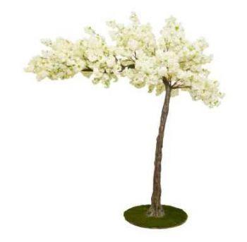 Canopy Cherry Blossom Tree