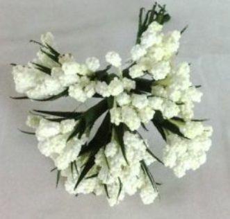 Grape Hyacinth (Bunch)