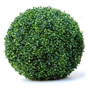 Boxwood Buxus Plants