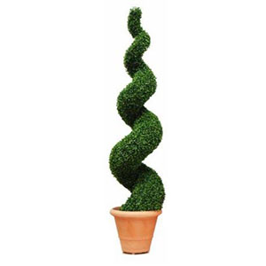 Boxwood Buxus Topiary